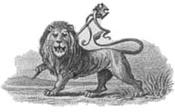 Lion_ethopia