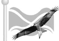 Red_kite_scotland_1