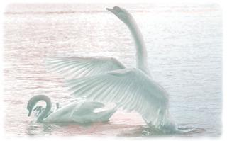 Swan_pseudopainting